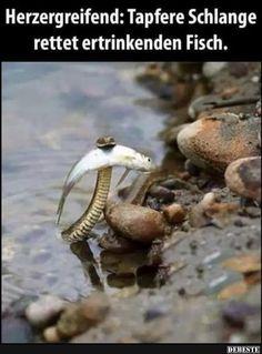 Besten Bilder, Videos und Sprüche und es kommen täglich neue lustige Facebook Bilder auf DEBESTE.DE. Hier werden täglich Witze und Sprüche gepostet! Funny Facts, Funny Quotes, Funny Memes, Hilarious, Best Pictures Ever, Cool Pictures, Funny Pictures, Animals And Pets, Funny Animals