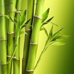 44 Comfy Bamboo Garden Décor Ideas - DECORRACKS 44 Comfy Bamboo Garden Décor Ideas - Garden decorations are actually the outside image of your house from the inside, when you look the house and the outdoor decorations are beautiful it . Bamboo Landscape, Landscape Design, Bamboo Texture, Bamboo Tree, Bamboo Leaves, Bamboo Crafts, Garden Junk, Mediterranean Garden, Tree Tops