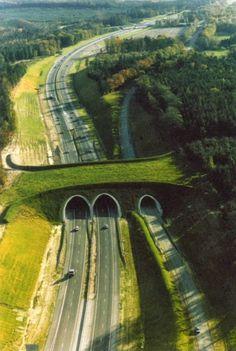 Puente ecológico ecoducto Países Bajos