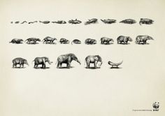 WWF campaign by Ogilvy & Mather, China.