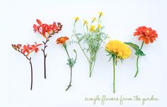 Simple flowers from the Garden.  Photography Lisa Warninger