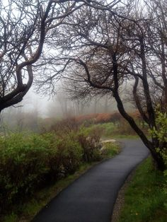Coastal Maine fog on the Marginal Way, Ogunquit