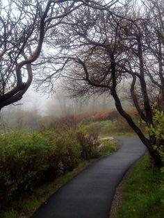 Coastal Maine fog on the Marginal Way, Ogunquit