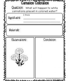 Color Changing Carnations   science fair kindergarten/first grade ...
