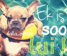Pin by Mary Jacke on French Bulldogs Afrikaans, Laughter, Lol, Animals, French Bulldogs, Inspiration, Mary, Sayings, Quotes