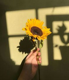 I wanted to post an aesthetic pic, yellow themed with a focus piece x Aesthetic Colors, Flower Aesthetic, Aesthetic Photo, Aesthetic Pictures, Aesthetic Yellow, Sun Aesthetic, Aesthetic Iphone Wallpaper, Aesthetic Wallpapers, Photographie Portrait Inspiration