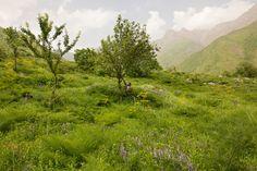Tajikistan's Rasht Valley