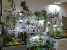 週末は水替えだけ。  #アクアリウム #観葉植物 #ボタニカルライフ #aquarium #plants #botanical