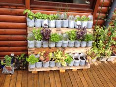 Recycled vertical herb garden using an old wooden pallet and milk bottles