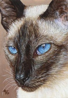 Kalima #3 (Siamese Cat ACEO) - Click Image to Close