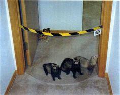 Pet Gate  https://www.pinterest.com/aunaleismari/ferrets/