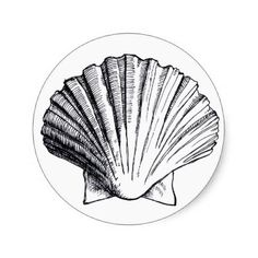 Black and White Seashells Drawings | Seashell Drawing