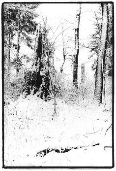 Hainich NP winterlich