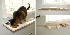 Ross Island cat perch and feeding station via Hauspanther - Cat Food - Ideas of . - Home - Ross Island cat perch and feeding station via Hauspanther – Cat Food – Ideas of Cat Food - Animal House, Cat Feeding Station, Cat Habitat, Cat Perch, Cat Feeder, Animal Projects, Diy Projects, Cat Playground, Cat Room