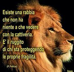 Rabbia del leone