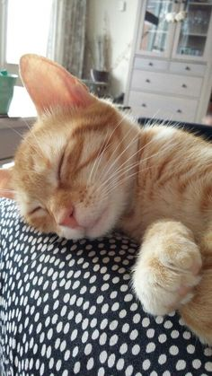 Cute Cats And Kittens, I Love Cats, Crazy Cats, Cool Cats, Orange And White Cat, White Cats, Orange Tabby Cats, Red Cat, Gato Grande