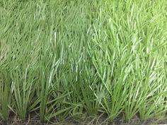 Tại sao nên mua cỏ nhân tạo chất lượng? - Cỏ Nhân Tạo, cỏ nhân tạo sân bóng đá, cỏ nhân tạo sân vườn, cỏ nhân tạo trang trí