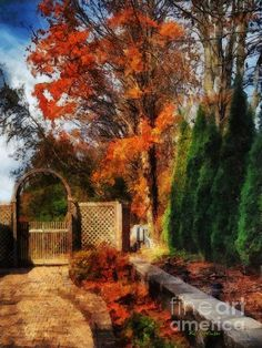 """""""Glorious Autumn"""" ~ © 2015 RC deWinter ~ All Rights Reserved"""