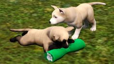 Sims 3 Pets dogs   The Sims 3 Pets Wolf Hybrid Pups by huntinlabs