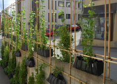 Climbing Green Wall Crafted From Bamboo Scaffolding & Hanging Bags in Norway    Read more: Climbing Green Wall Crafted From Bamboo Scaffolding & Hanging Bags in Norway | Inhabitat - Green Design Will Save the World