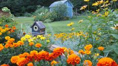 Garden shed in center of grass.
