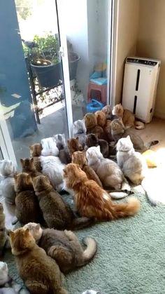 Funny Animal Jokes, Funny Cute Cats, Cute Baby Cats, Funny Animal Pictures, Cute Funny Animals, Kittens Cutest, Funny Looking Animals, Cute Wild Animals, Super Cute Animals