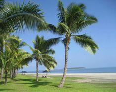 cocos nucifera - Google Search Sun Plants, Tropical, Plantar, Palm Trees, Coconut, Beach, Water, Outdoor, Google Search