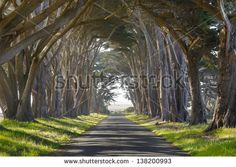 Tunnel of trees leading lines - stock photo