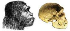 Vista de un Homo Neanderthalensis y su cráneo.