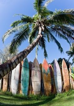 Surf Boards summer beach surf board. I think my dream will always be to learn how to surf