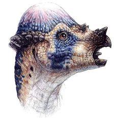 The Lost World Jurassic Park Pachycephalosaurus head drawing Dinosaur Head, Dinosaur Drawing, Dinosaur Fossils, Prehistoric Dinosaurs, Prehistoric Creatures, Dinosaur Pictures, Jurassic Park World, Extinct Animals, Creature Design
