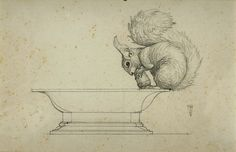 Animalarium - fantastic drawing of a squirrel.