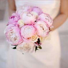 Il Rose Garden