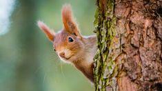 So helfen Eichhörnchen der Schlaganfallforschung