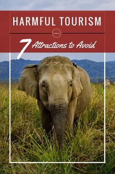 7 Harmful Tourist Attractions you should avoid while traveling!