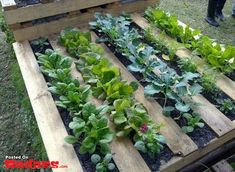 Patio gardening for beginners preparing a garden bed for vegetables,setting up a backyard garden landscaping small back gardens,exterior garden design ideas balcony garden inspiration. Potager Palettes, Dream Garden, Home And Garden, Garden Fun, Garden Modern, Vege Garden Ideas, Garden Ideas Using Pallets, Garden Crafts, Smart Garden