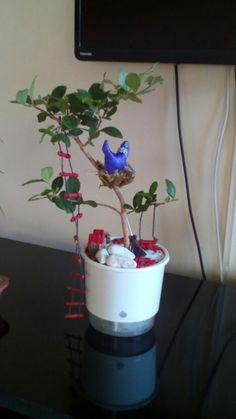 Bonsai acerola com mini jardim