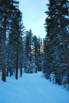 Mammoth Lakes - in the trees