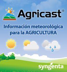 VISUAL 3.0: el software agrícola que está mejorando resultados en las empresas - Agronegocios