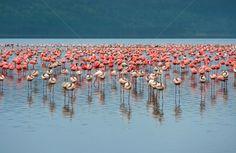 878914_flamingo-afrika-see-wasser-landschaft-schönheit.jpg (600×391)