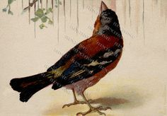 DIGITAL scan  Handpainted BIRD Looking up antique by FrenchKissed, $3.99