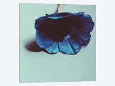 Blue by Morgan Kendall 1-piece Canvas Wall Art