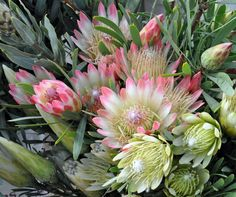 Protea- I love these smaller flowers.