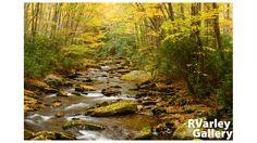 RVarley Gallery Landscape Images Gold Stream in the Smokies