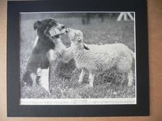 SHEEPDOG Collie dog PRINT Vintage 1935 print bookplate Unique collectors gift birthday anniversary dog lover present Canine nursemaid dog by Hollysprints on Etsy