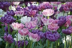 image of flowers in a oslo meadow