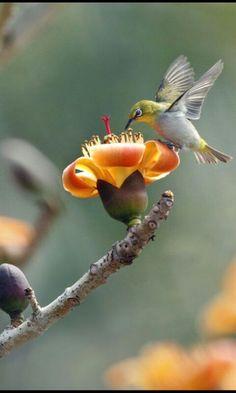 hummingbird looking for food #bird #birds #beautifulbird