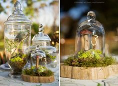 Succulents under a glass cloche with moss-Makes a perfect centerpiece.