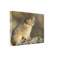 >>>Coupon Code          	Hitting the High Note! Gallery Wrap Canvas           	Hitting the High Note! Gallery Wrap Canvas This site is will advise you where to buyDeals          	Hitting the High Note! Gallery Wrap Canvas Review on the This website by click the button below...Cleck Hot Deals >>> http://www.zazzle.com/hitting_the_high_note_gallery_wrap_canvas-192400956704623348?rf=238627982471231924&zbar=1&tc=terrest