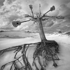 Roots of Music by Dariusz Klimczak, via 500px